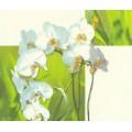 Обои винил Rasch 825008 зел орхидея (0.53*10м)