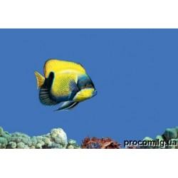 Декор Моно 27,5*40  Fish 1