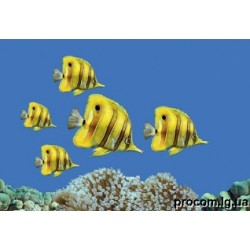 Декор Моно 27,5*40 Fish 2