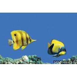Декор Моно 27,5*40 Fish 3