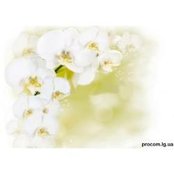 Декор. влагост. потолок 2500мм*2000мм*9мм Белая орхидея (8шт)